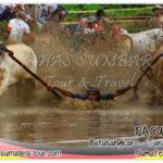 Pacu Jawi Sumbar - Tanah Datar - Batusangkar - Sumatera Barat - Bukittinggi Padang